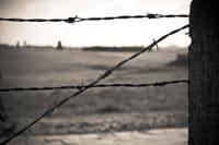 La Shoah, per non dimenticare: tema svolto sullo sterminio degli ebrei